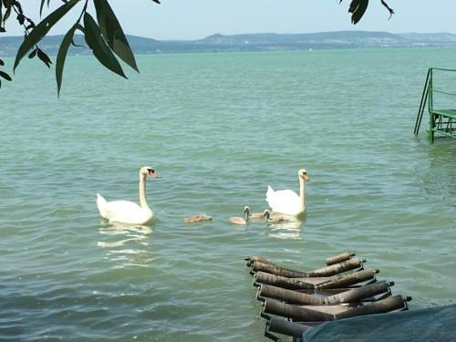 Orchidea Apartment Balatonlelle